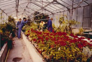 1980 - Les serres du Centre d'aide par le travail (CAT) Les Prés